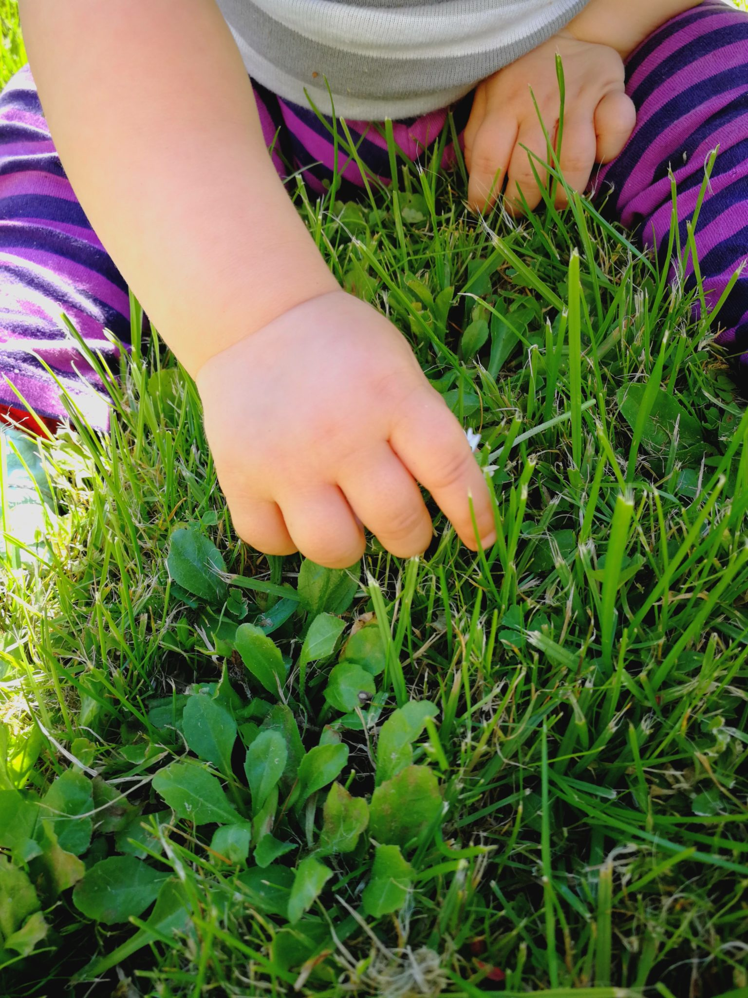 Baby pflückt Gras