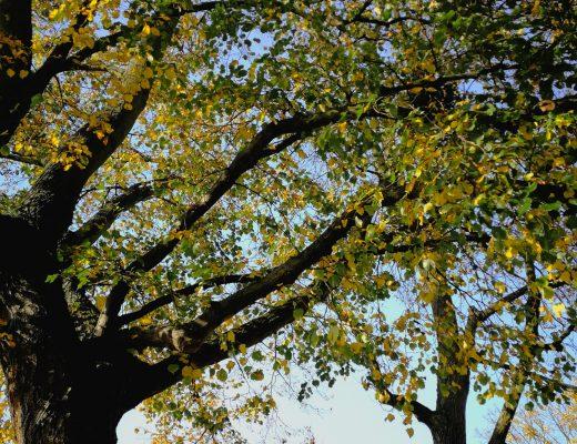 Baumleuchten Herbst
