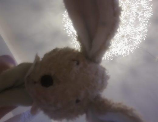Hasen Selfie