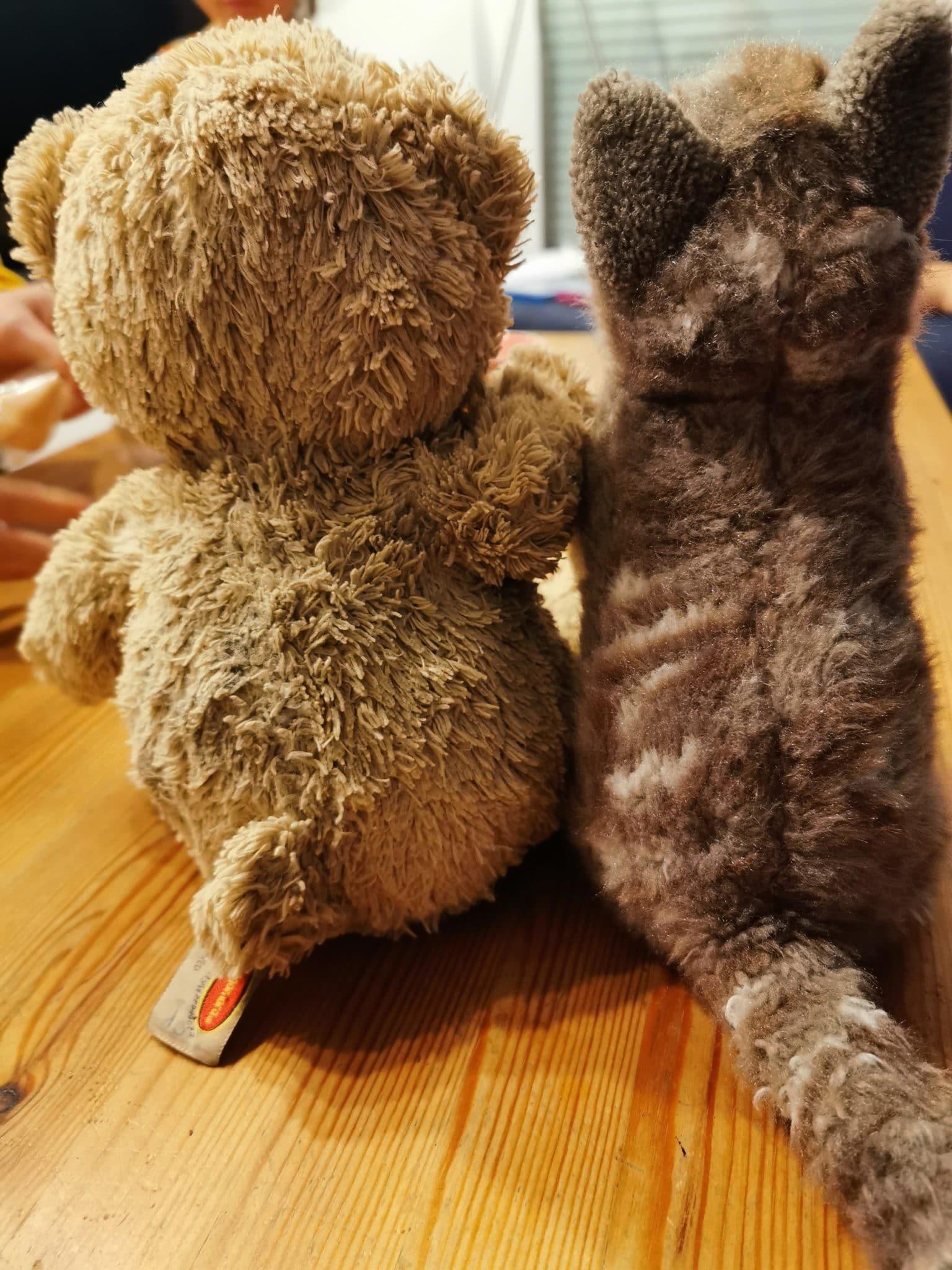 Teddy Rettungsaktion
