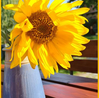 Berliner Inklusionsdschungel_Sonnenblume