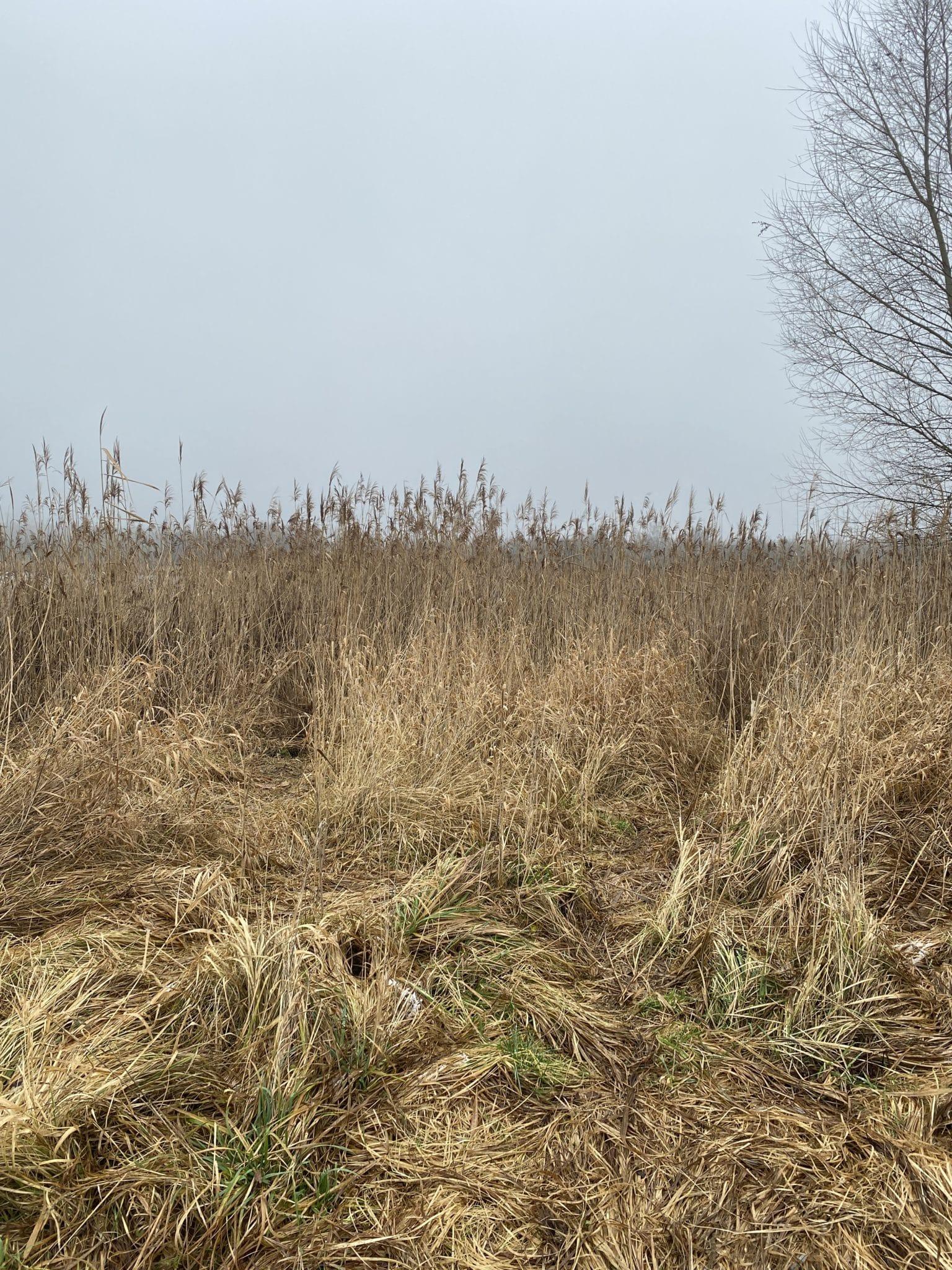 #10 Mal mit der Tochter, mal mit dem Mann: Wir gehen viel spazieren im Januar und laufen durch das Bucher Moor.