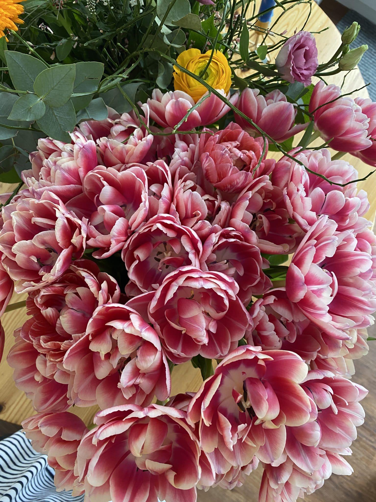Die Tulpen geben hier nochmal alles. Wunderschön.
