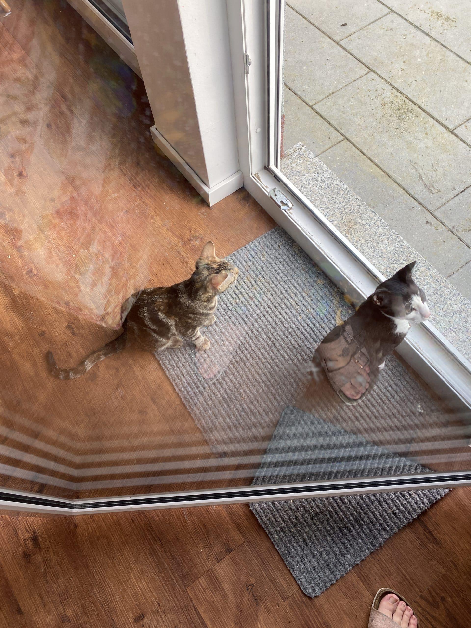 Heute ist das Wetter besser, die Katzen sind jedenfalls interessiert.