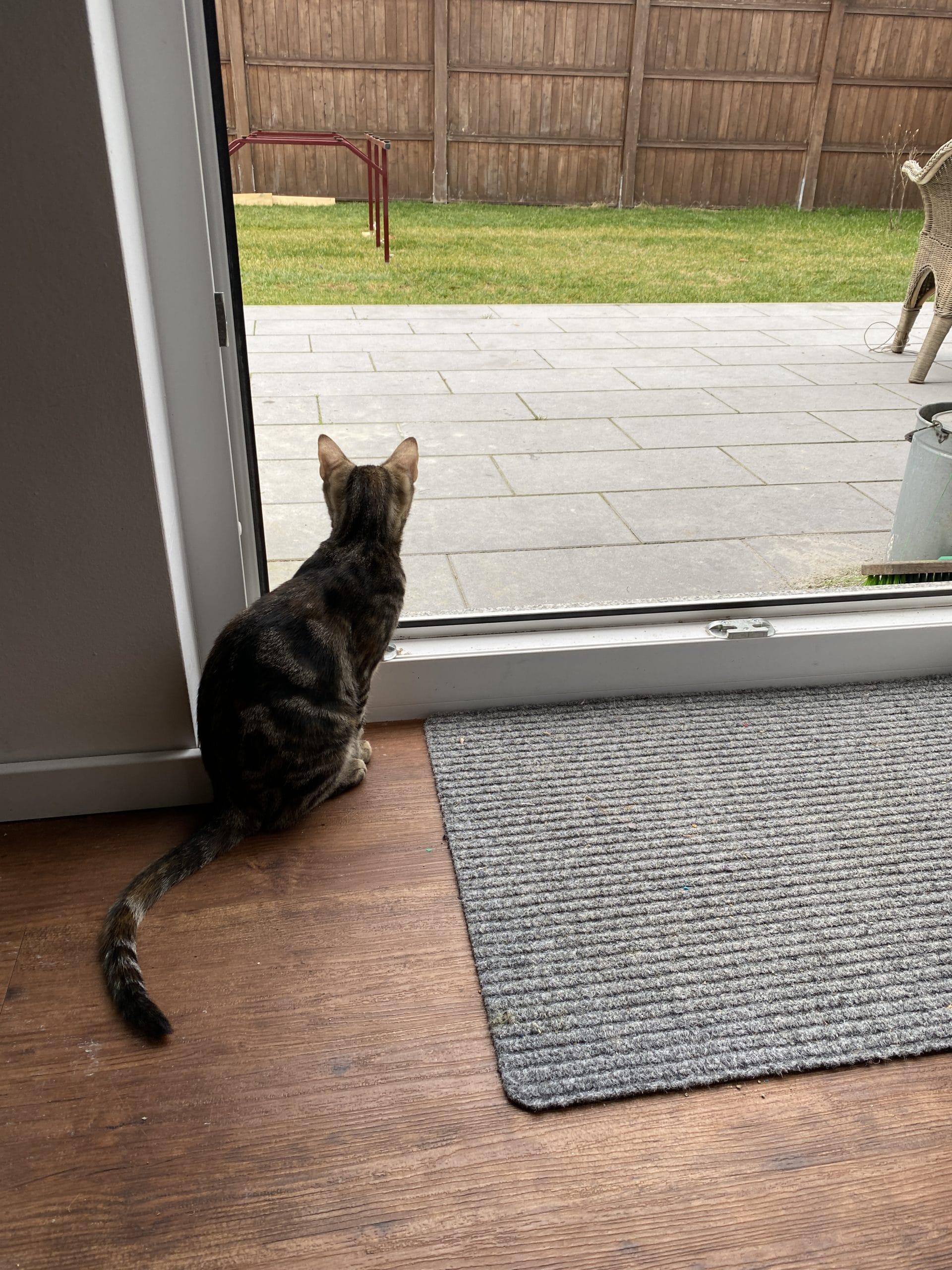 Was für doofes Wetter, finden auch die Katzen und starren raus.