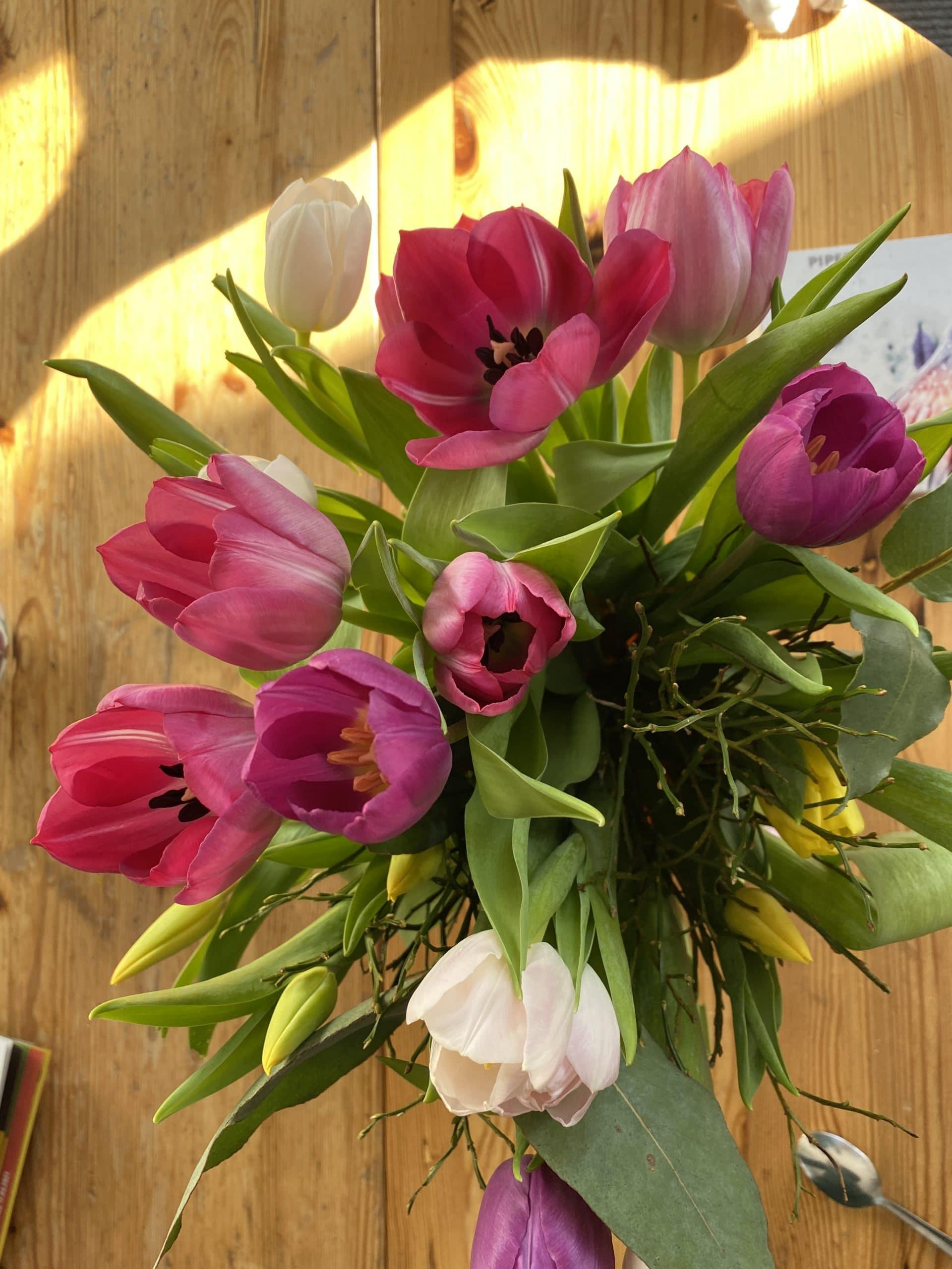Hallo Samstag. Meine Tulpen sind über Nacht aufgegangen, wie schön.