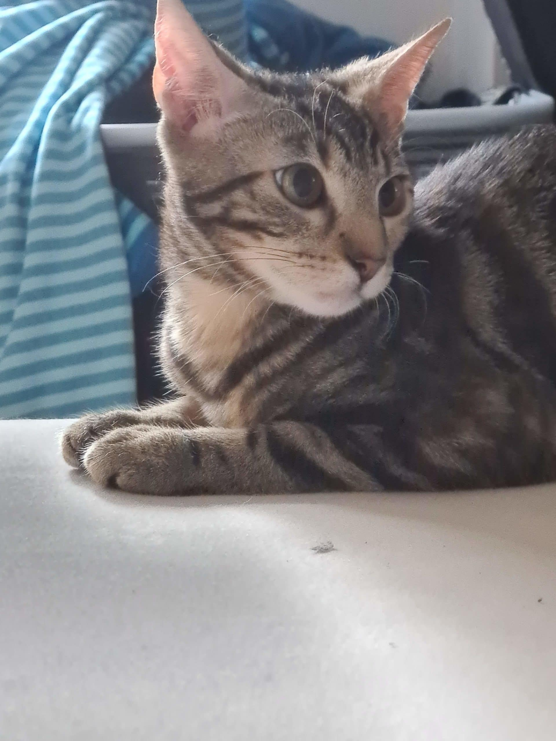 #14 Ist diese Katze nicht wunderschön?
