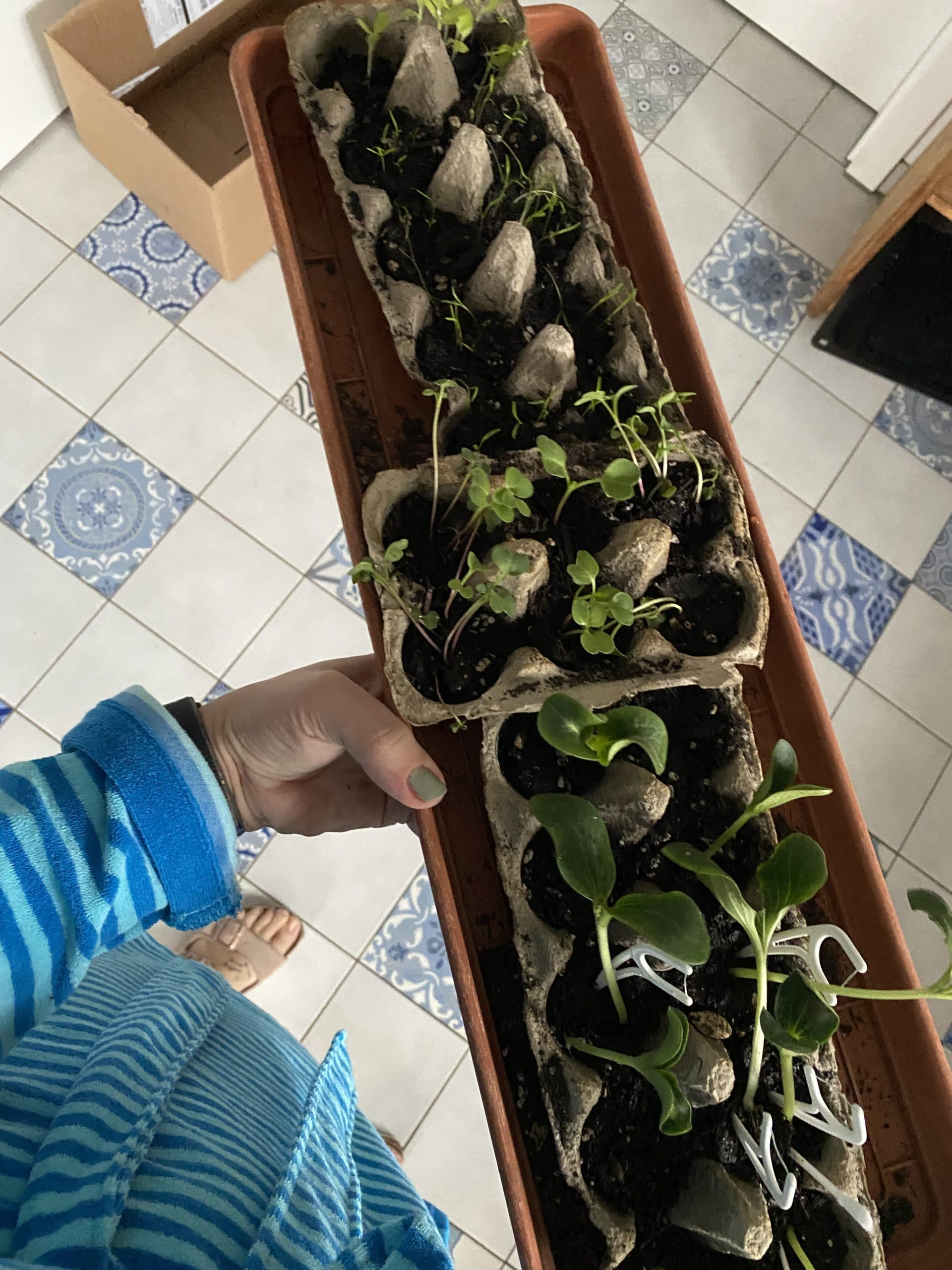 Werden jeden Tag brav gegossen, die kleinen Gemüsefreunde.