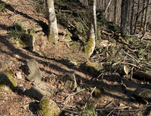 Schwarzwald Titisee