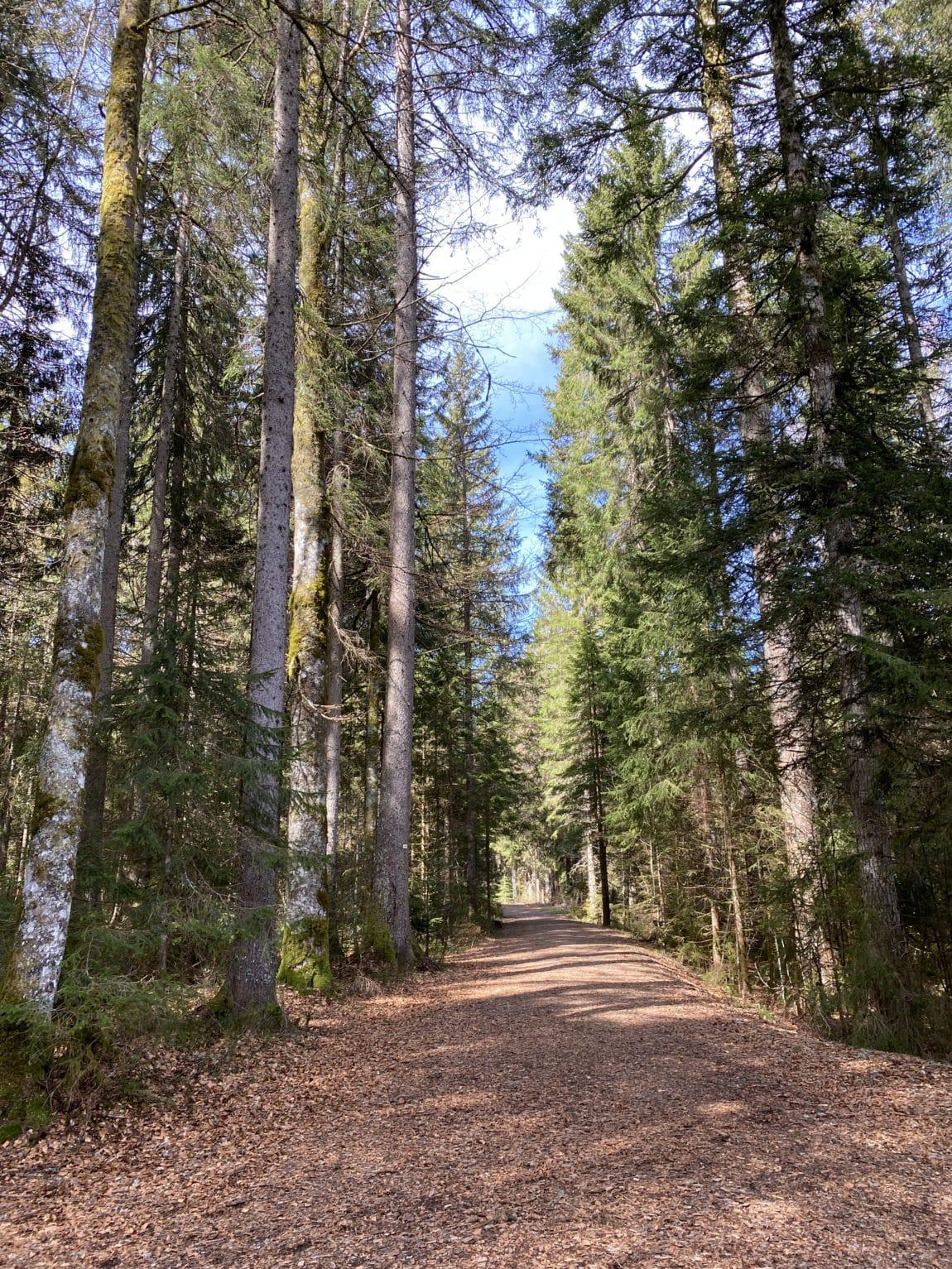 Kinderreha im Schwarzwald - grossekoepfe