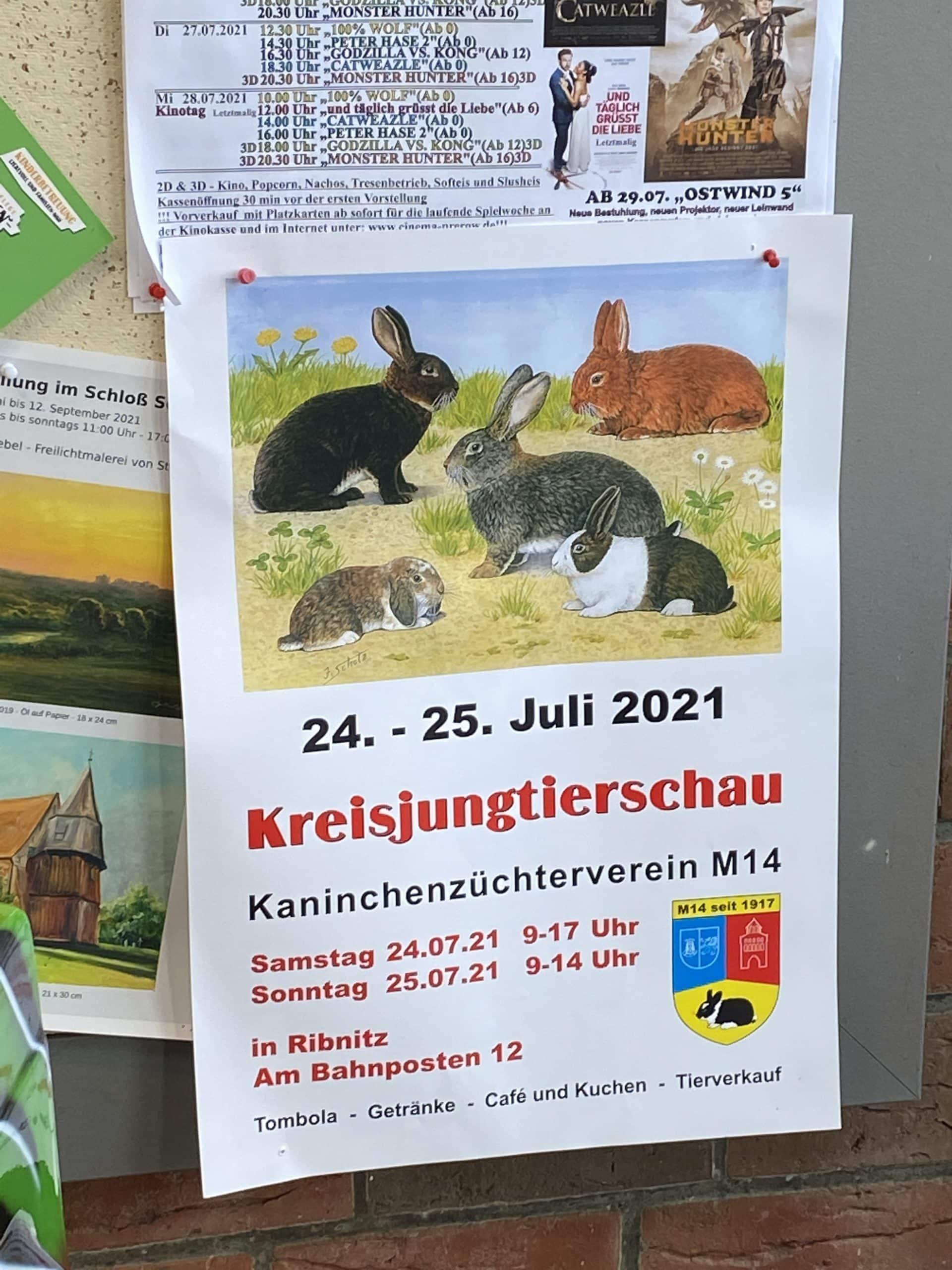Viel interessanter finden die Kinder dieses Plakat, zur Kreisjungtierschau von Kaninchen.