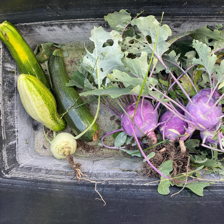 und dann ernten wir noch anderes Gemüse.