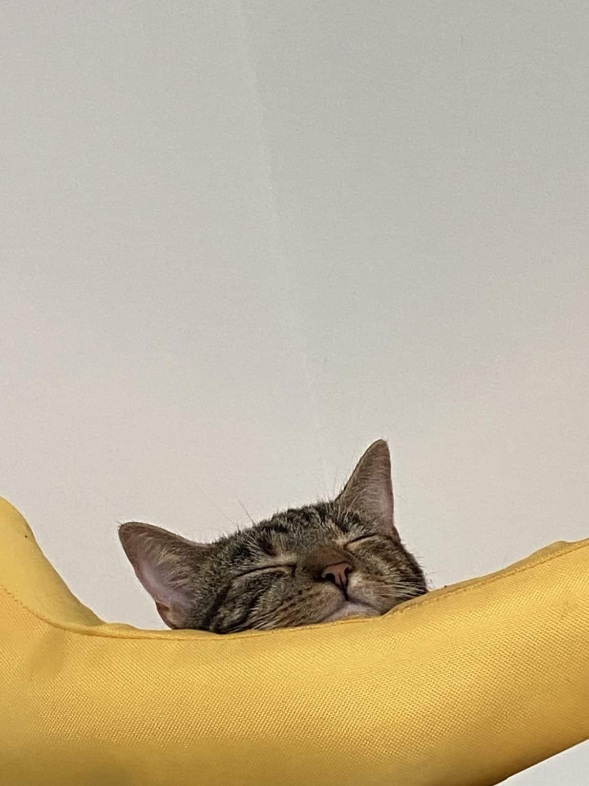 #12 Nicht nur die Katze ist müde nach dem heutigen TAg.